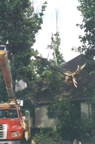 Tree limbs are carefully craned off buildings